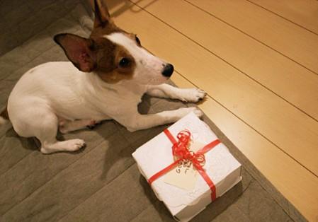 え!?プレゼント?