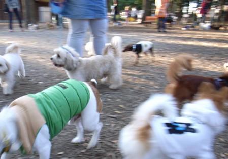 犬の日 in 代々木公園